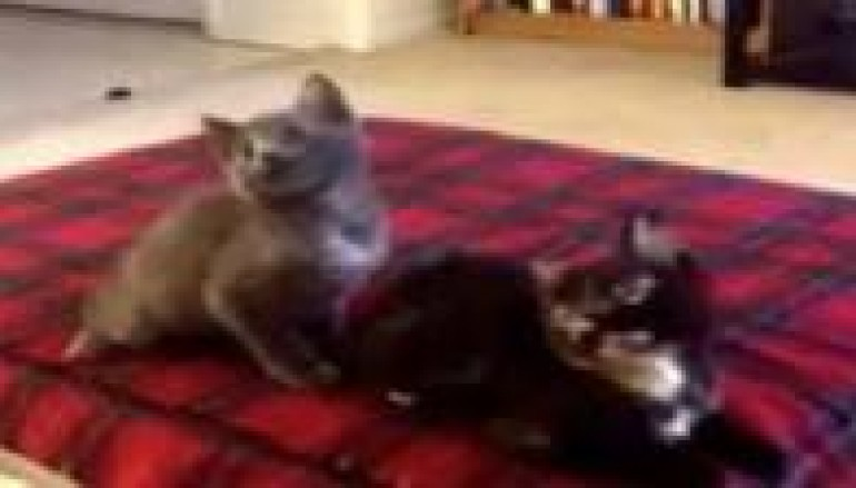 Kittens Jam To Turn Down For What And You Will Love It